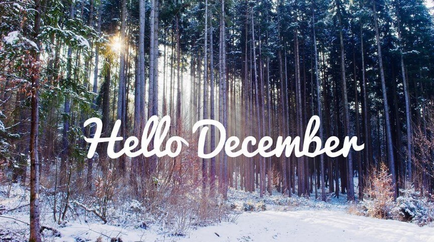 Dear December Quotes