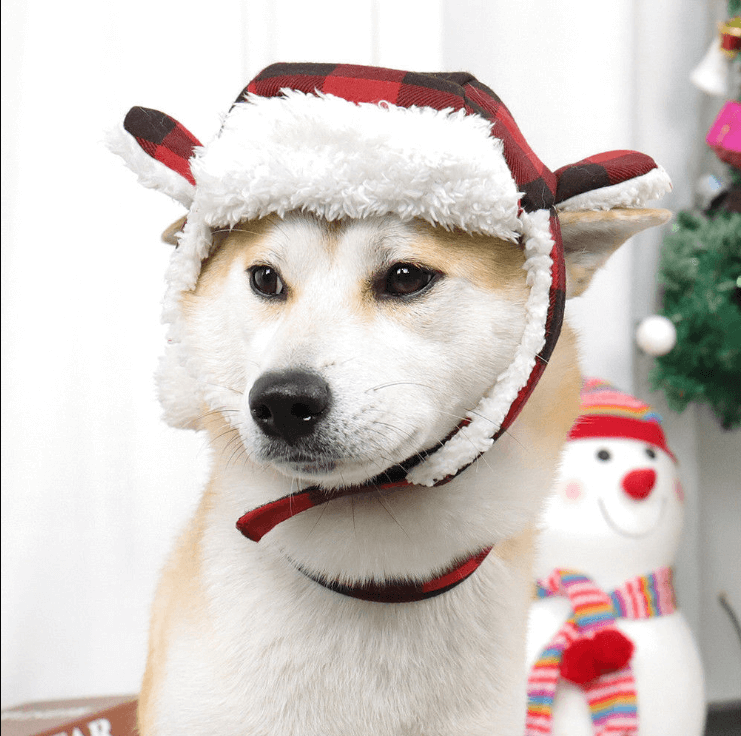 Christmas Costumes For Large Breed Dogs