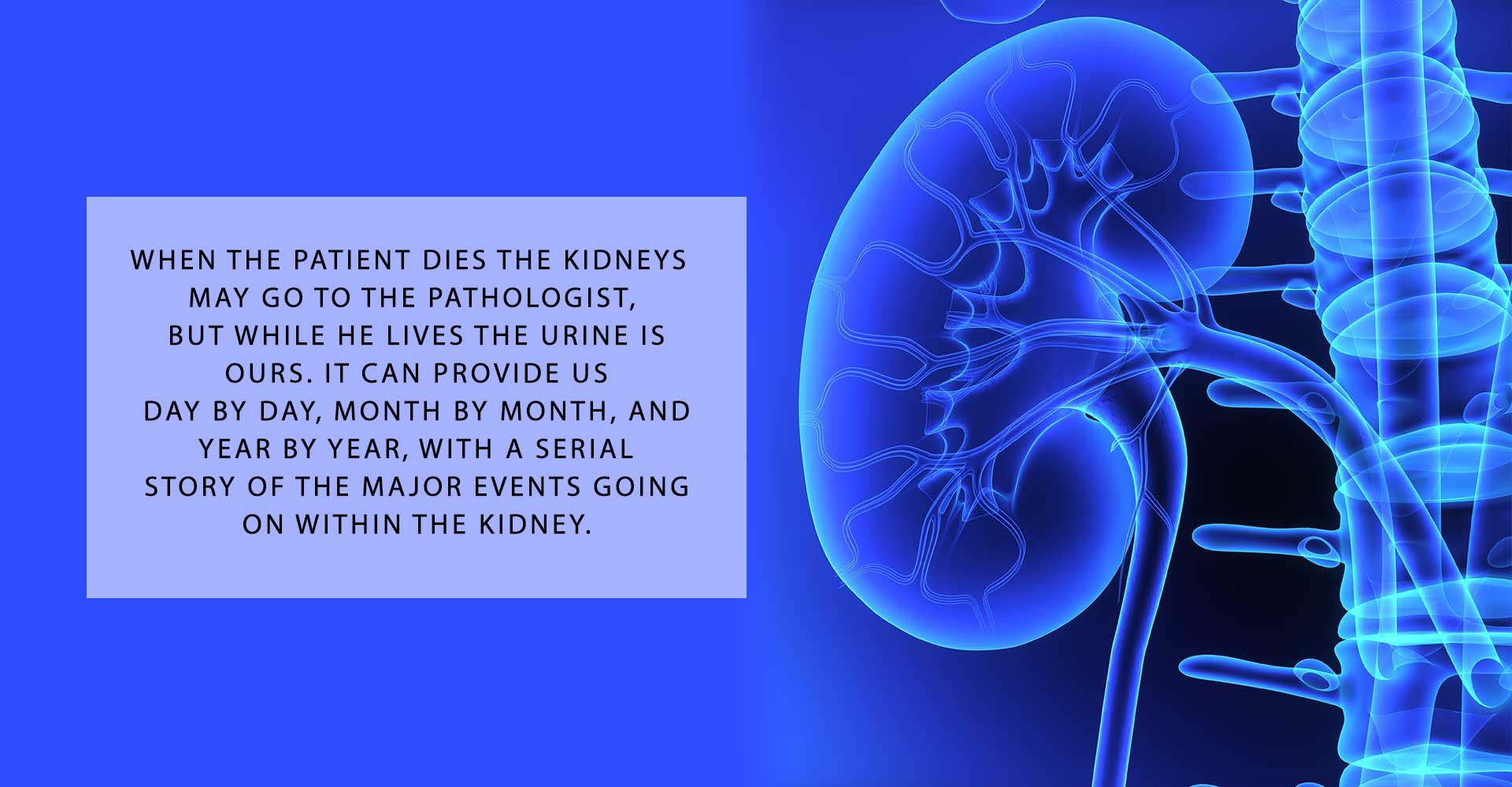 Good Kidney Slogans