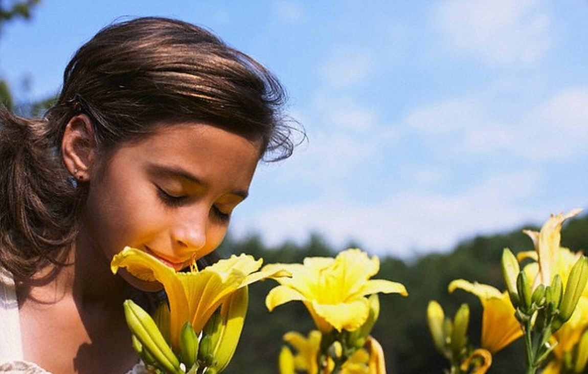 5 Sense Of Smell In A Day In The Country