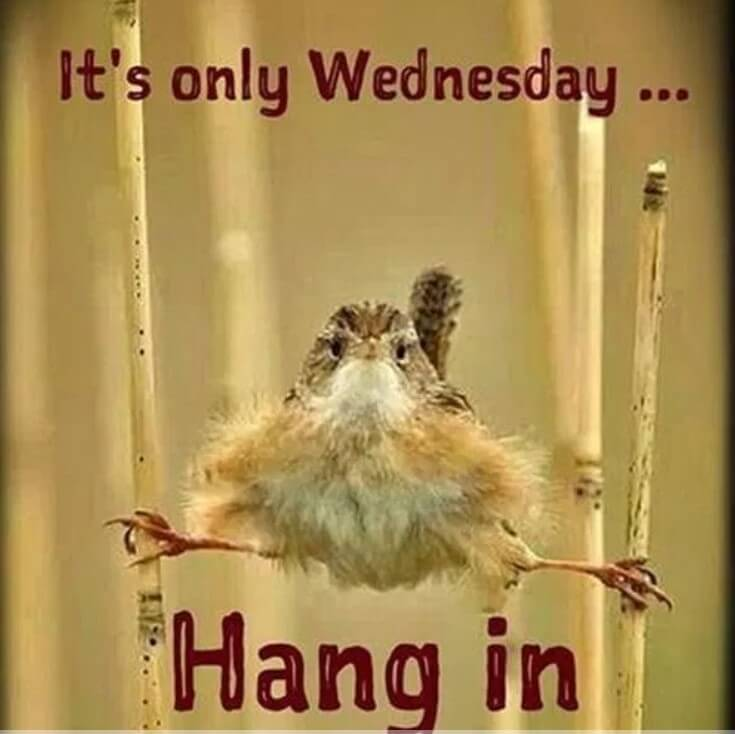 Wednesday Quotes Instagra